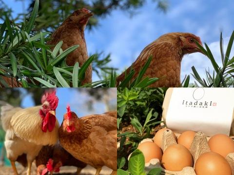 12pcs【二度見する卵/笑顔広がる幸せ卵】平戸平飼い放牧卵itadaki【希少平飼い放牧卵】(純国産鶏) 【Non-GMO(非遺伝子組み換え)/PHF(ポストハーベストフリー)飼料】