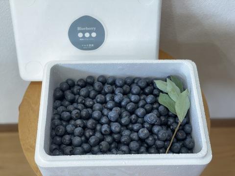 【そのまま食べられる無農薬フローズンブルーベリー デザートパック】1Kg 木成りで完熟した朝摘みブルーベリーを当日冷凍。