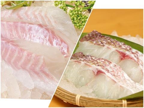 【大人気の組合せ】天草産「真鯛お刺身用のサク(3パック/約250g)&「真鯛の切身(5パック)」(養殖)急速凍結