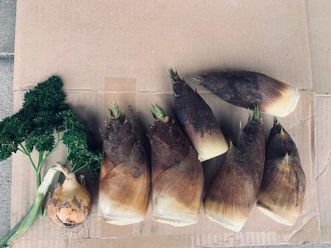 京都産 丹波タケノコ 昼採れたて柔らか 自然栽培(無農薬・無肥料・除草剤不使用) 筍