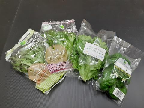 【組合せ自由!】【無農薬栽培】伊勢菜園の野菜セット フリルレタス5袋(60g以上)レッドリーフレタス2袋(60g以上)グリーンリーフ2袋(60g以上)バジル1袋(15g以上)合計10袋