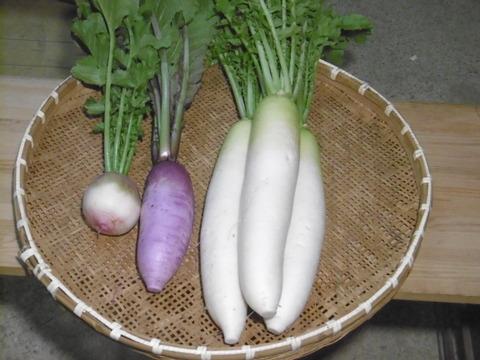 【今だけの出品記念価格!】 旬の大根食べ比べセット(世界農業遺産ブランド野菜)