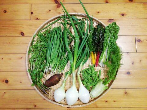 【農薬・化学肥料不使用】【クールで対応】野菜セット【必ずニラ入り】【6~8種類の野菜】【60サイズ箱】