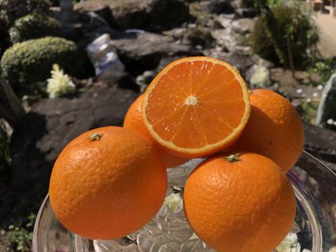 【 M~2Lサイズ3kg】94歳とみ子ばぁばの清見オレンジ