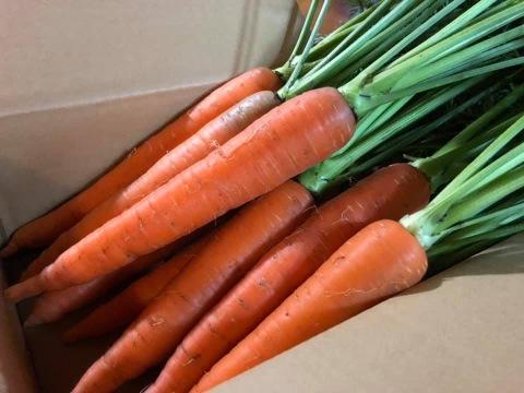 【甘みがギュッ‼️弊園一番人気🎶】自然栽培の冬にんじん 約5kg