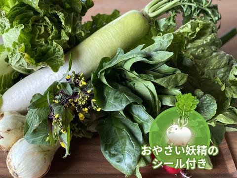 【食育やさいBOX】のびのび野菜セット