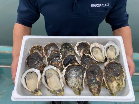 ㊗️3000件‼️突破特別価格‼️【超極濃プレミアム生食用岩牡蠣】超々特大サイズ5個+大サイズ10個MIXセット お客様に「ありがとう」と「美味しさ」を長崎県五島列島よりお届けいたします。