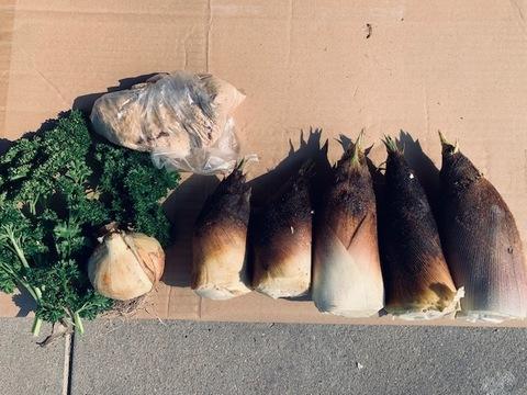 京都産 丹波タケノコ 小ぶり朝採れたて柔らか 自然栽培(無農薬・無肥料・除草剤不使用) 筍