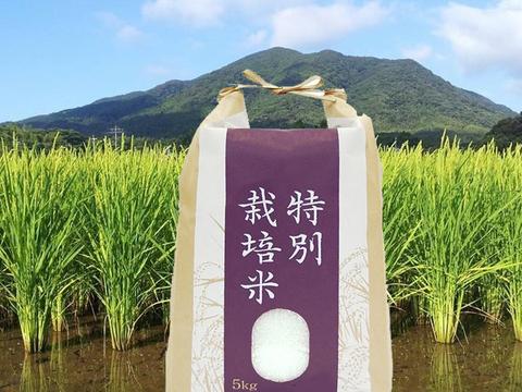 新米『元気つくし』 (玄米5kg) 農薬・除草剤不使用の特別栽培米、福岡県宗像「田野のおいしいお米」はリンゴガイ農法で安全・安心・美味 【熨斗付き】