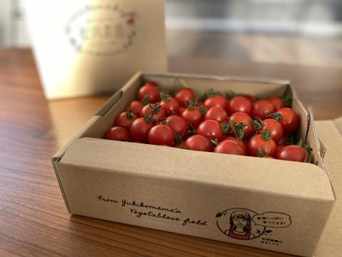 【たっぷりBOX】愛情たっぷりbaby tomato 800g ‐★★★‐