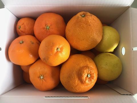 限定!!柑橘詰合せセット【旬の柑橘】高級品種から人気品種まで何が届くかはお楽しみ!!ご家庭用3kg