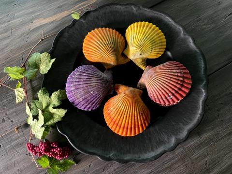 【若貝数量限定】甘み濃厚さホタテ超え!?食べる宝石「ヒオウギ貝」【20枚】