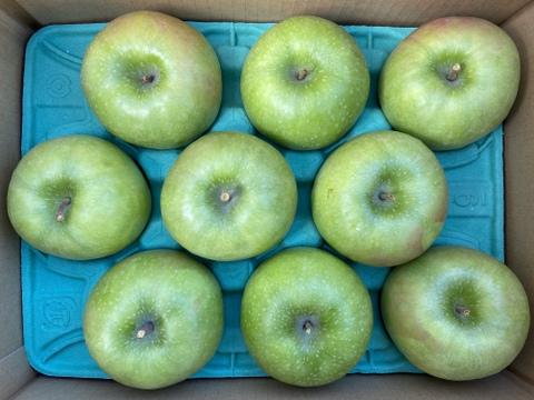 酸味りんご グラニースミス アップルパイにどうぞ 7個から10個