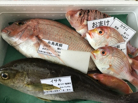 【魚介の福袋】糸島真鯛と厳選された鮮魚のお🉐なセット!