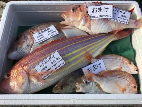 夏ギフト!残暑お見舞い8月出品最後‼️天然糸島真鯛1匹と漁師におまかせ鮮魚1匹セット!