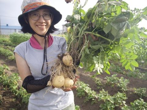 【新じゃが】栗のように黄色で甘味が強い!ホクホク食感のキタアカリ(1.6kg)