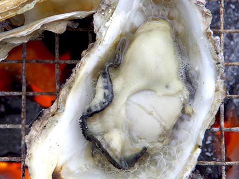 美味しさ、鮮度に自信あり! 広島県産牡蠣 殻つき 20個(約 110〜140g程度) 生食用 イカダ式