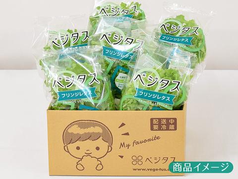 パラっとバラけて包丁いらず!フリンジレタス6袋セット。野菜嫌いなお子さんも喜んで食べる美味しさ!収穫即日発送!