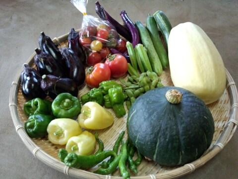 おまかせ旬の野菜セット(6~8種類)