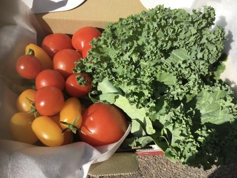 完熟!ミニトマトミックス 自家採種のこだわりトマトとケールのセット