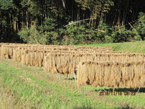 玄米 ( 肥料農薬不使用、自家採種、おだ掛け)+野菜セット
