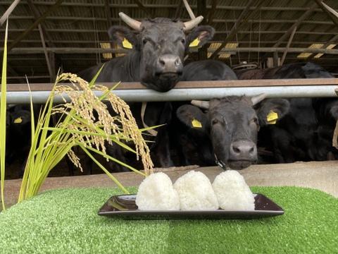 『新米』令和3年度産 特別栽培米🌾コシヒカリ(10kg)