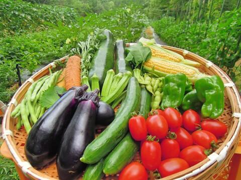 有機JAS認証のハーブと野菜のセット