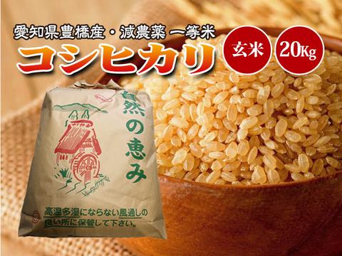 【減農薬・一等米】令和2年 愛知県産 新米 コシヒカリ 玄米20g(10kg×2袋)