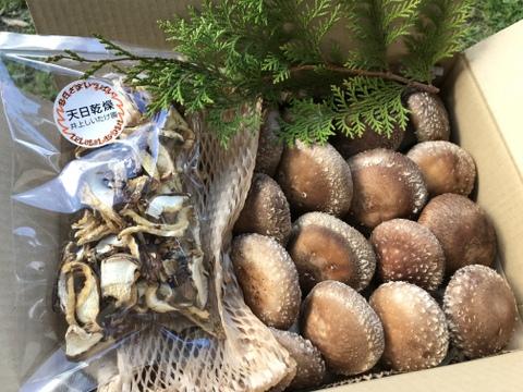 味にこだわり!原木栽培椎茸のセット(生+乾燥)