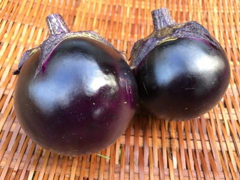 高級京野菜!おいしさで評判の「賀茂ナス」(8本)【農薬不使用】