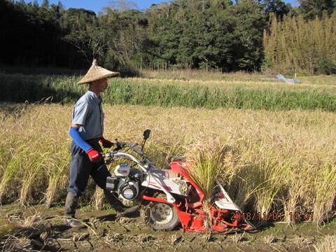 昭和のリバイバル玄米(肥料農薬不使用、自家採種、おだ掛け)+野菜セット