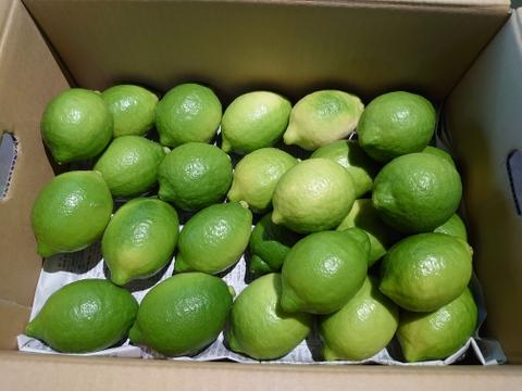 【今だけ500円off】すっきりさわやか国産夏レモン!1kg(8玉~10玉)