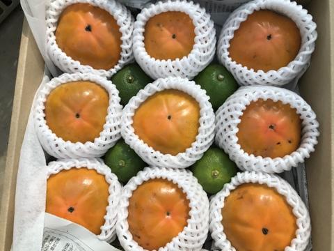 大分県産柿とおまけのカボス2箱セット