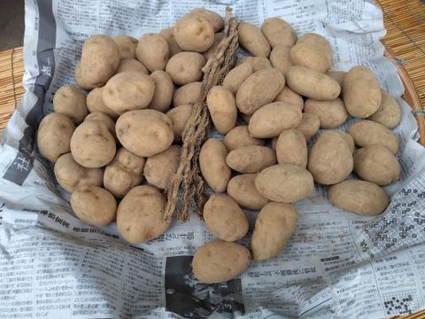 有機ジャガイモ2種セット(4kg)
