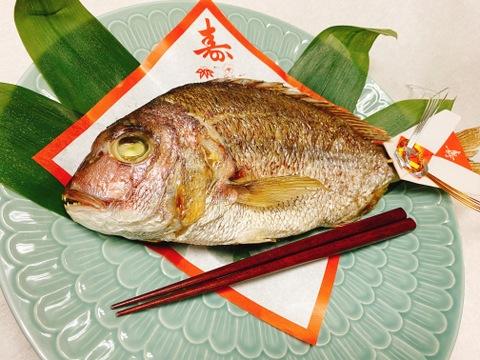 【祝い鯛】尾頭付き真鯛(3~4人前)ウロコ・内蔵処理済(冷蔵)