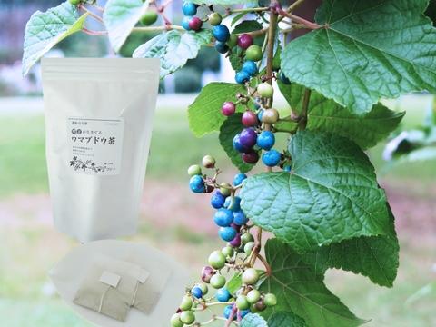 酵素が生きてる!ウマブドウ茶(紐付きティーバッグ入り2gx18包x1袋)  独自の特殊加工を是非!野ぶどう茶
