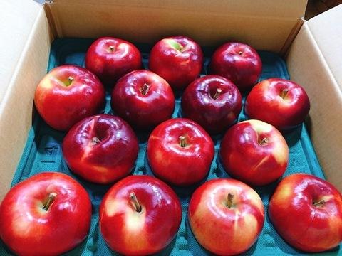 【アップルパイ向き!】紅の夢 10kg (28~32個)