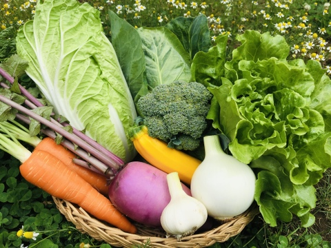 Sサイズ *旬野菜セット(約6~7品)【完全無農薬】