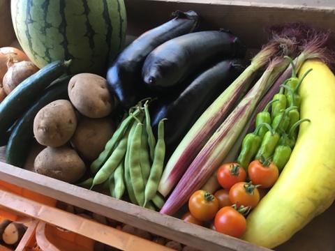 【夏季限定】楽しい野菜の宝箱「やさいばこ」《野菜10品目》レシピシートやまと君コレクションカバー付き