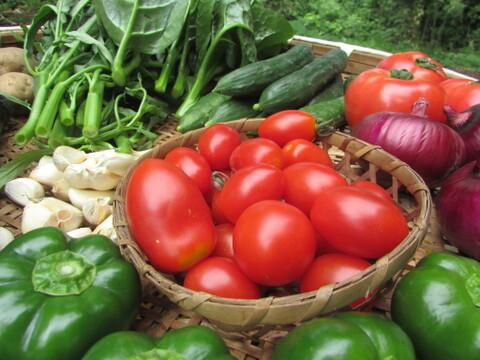 【トマトがメイン】南阿蘇から旬の夏野菜よりどり6品セット