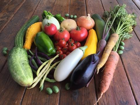 季節のくさむら野菜セット 農薬・肥料不使用&不耕起栽培(10品目程度)