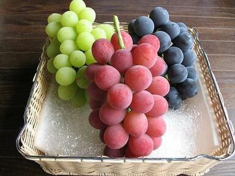 【予約販売9月お届け】漆山果樹園ぶどう三昧5房食べ比べ(栽培30品種から厳選)