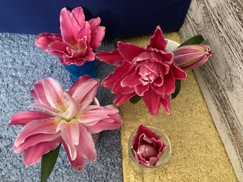 <One Lily ワンリリー>百合生花5個八重ジュリア濃いピンク