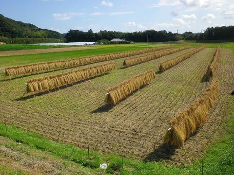 【味に自信あり】農薬・肥料不使用 はざ掛け天日干し玄米2㎏×3品種食べ比べセット
