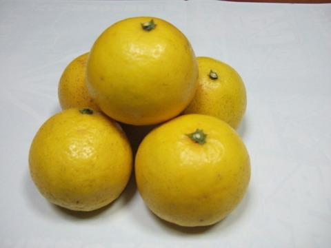 さわやかな初夏の味 土佐小夏 5㎏  化学系農薬を使わない栽培