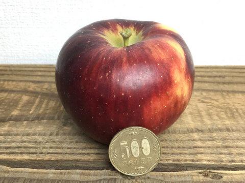 10月発送 りんご 家庭用小玉 秋映 約2.5キロ 11-16玉 復興支援 #akibae-d-3k