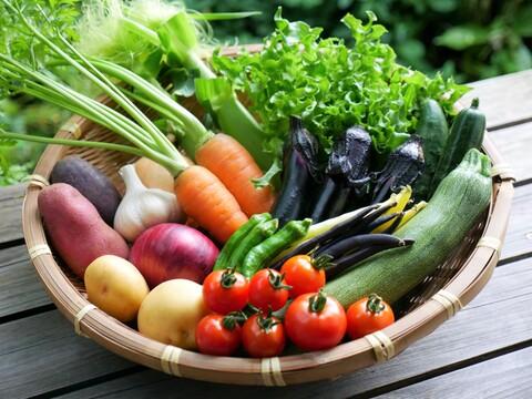 今が旬!たっぷり野菜セットM【8~9種類】(80サイズ)