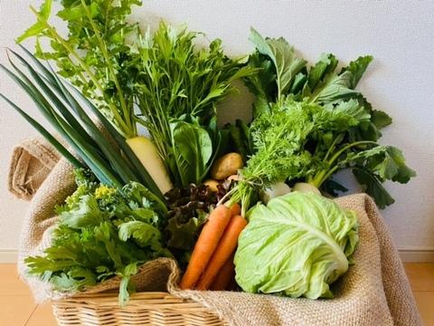 京都からパクチー1品+旬の野菜を詰め合わせ5品=6品目野菜セット