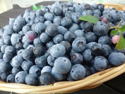 【16年間農薬不使用】使いやすい冷凍ブルーベリー 1キロ