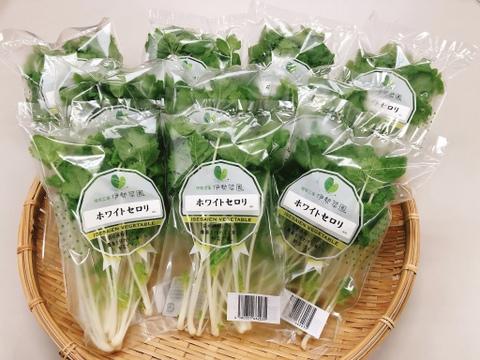 【農薬:栽培期間中不使用】サラダでも食べれる!?ミニホワイト(ホワイトセロリ)【10袋入り1袋30g品】